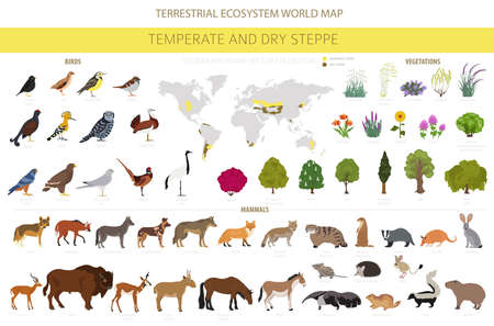 Temperate and dry steppe biome, natural region infographic. Prarie, steppe, grassland, pampas. Terrestrial ecosystem world map. Animals, birds and vegetations ecosystem design set. Vector illustration Ilustração