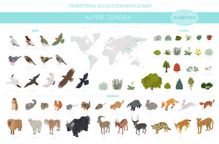 Apine tundra biome, natural region isometric infographic. Terrestrial ecosystem world map. Animals, birds and plants design set. Vector illustration