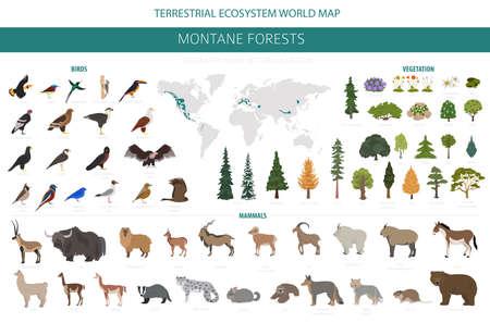 Biome de la forêt montagnarde, infographie de la région naturelle. Carte du monde de l'écosystème terrestre. Ensemble de conception d'écosystèmes d'animaux, d'oiseaux et de végétations. Illustration vectorielle Vecteurs