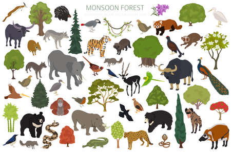 Monsoon forest biome, natural region infographic. Terrestrial ecosystem world map. Animals, birds and vegetations isometric design set. Vector illustration