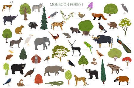 Monsoon forest biome, natural region infographic. Terrestrial ecosystem world map. Animals, birds and vegetations design set. Vector illustration Illustration