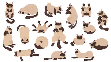 Sleeping cats poses. Flat color simple style design. Siamese colorpoint cats. Vector illustration