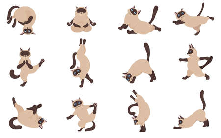 Cats yoga. Siamese cats. Different yoga poses and exercises. Vector illustration Çizim
