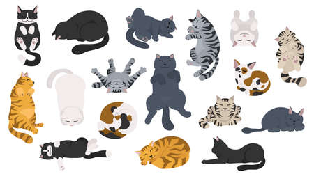 Sleeping cats poses. Flat different color simple style design. Vector illustration