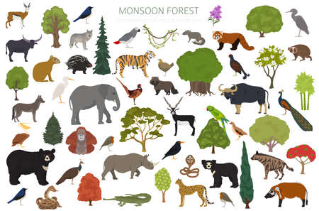 Monsoon forest biome, natural region infographic. Terrestrial ecosystem world map. Animals, birds and vegetations design set. Vector illustration Иллюстрация