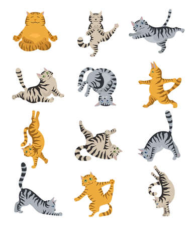 Cats yoga. Different yoga poses and exercises. Striped and tabby cat colors. Vector illustration Illustration