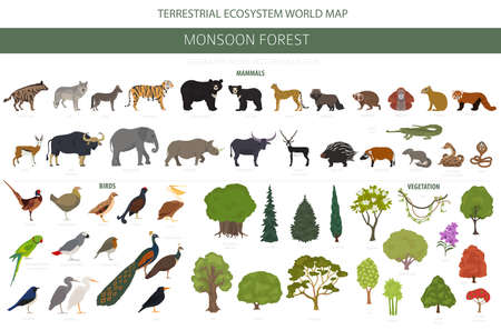 Monsoon forest biome, natural region infographic. Terrestrial ecosystem world map. Animals, birds and vegetations design set. Vector illustration Stock Illustratie