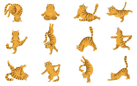 Cats yoga. Different yoga poses and exercises. Striped and tabby cat colors. Vector illustration Çizim