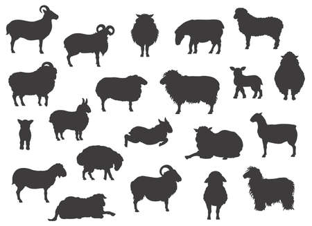 Sheep breeds black silhouettes collection. Farm animals set. Flat design. Vector illustration