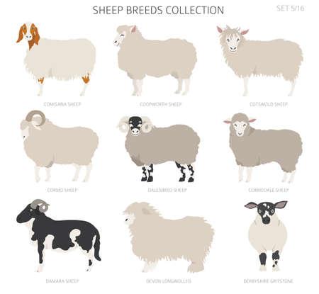 Sheep breeds collection . Farm animals set. Flat design. Vector illustration