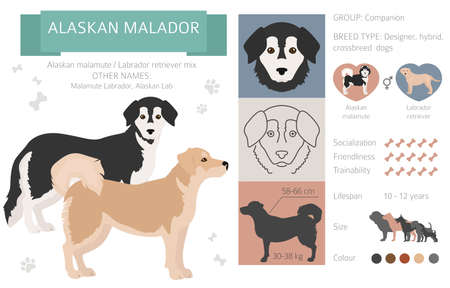 Designer dogs, crossbreed, hybrid mix pooches collection isolated on white. Alaskan malador flat style clipart infographic. Vector illustration