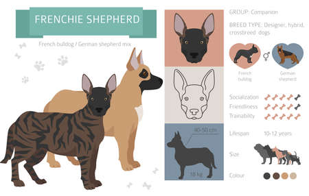 Designer dogs, crossbreed, hybrid mix pooches collection isolated on white. Frenchie shepherd flat style clipart infographic. Vector illustration Ilustração