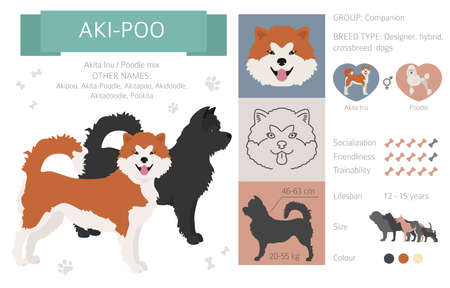 Designer dogs, crossbreed, hybrid mix pooches collection isolated on white. Aki-Poo flat style clipart infographic. Vector illustration