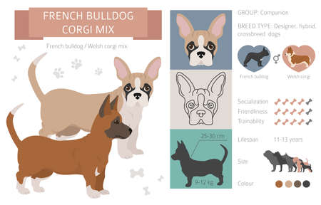 Designer dogs, crossbreed, hybrid mix pooches collection isolated on white. French bulldog corgi mix flat style clipart infographic. Vector illustration