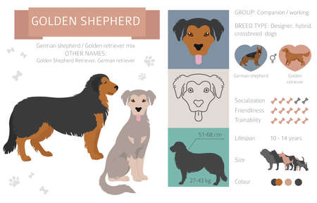 Designer dogs, crossbreed, hybrid mix pooches collection isolated on white. Golden shepherd flat style clipart infographic. Vector illustration