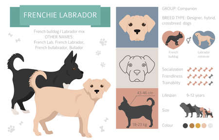 Designer dogs, crossbreed, hybrid mix pooches collection isolated on white. Frenchie labrador flat style clipart infographic. Vector illustration Ilustração