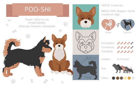 Designer dogs, crossbreed, hybrid mix pooches collection isolated on white. Poo-shi flat style clipart infographic. Vector illustration