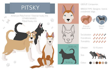 Designer dogs, crossbreed, hybrid mix pooches collection isolated on white. Pitsky flat style clipart infographic. Vector illustration Ilustração