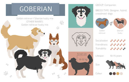 Designer dogs, crossbreed, hybrid mix pooches collection isolated on white. Goberian flat style clipart infographic. Vector illustration