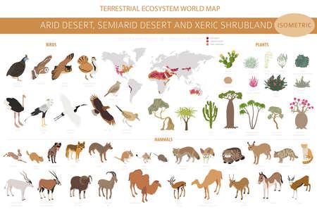 Desert biome, xeric shrubland biome, natural region infographic. Terrestrial ecosystem world map. Animals, birds and vegetations isometric design set. Vector illustration Illustration