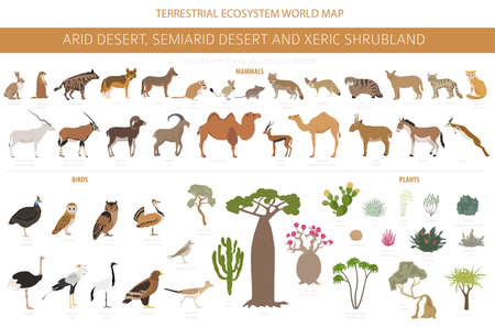 Desert biome, xeric shrubland natural region infographic. Terrestrial ecosystem world map. Animals, birds and vegetations design set. Vector illustration Vetores