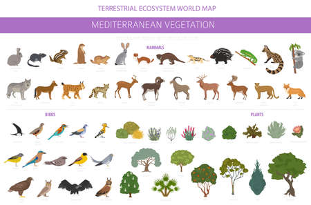 Mediterranean vegetation biome, natural region infographic. Terrestrial ecosystem world map. Animals, birds and vegetations design set. Vector illustration Illustration