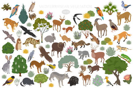 Mediterranean vegetation biome, natural region infographic. Terrestrial ecosystem world map. Animals, birds and vegetations isometric design set. Vector illustration Illustration