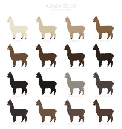 Camelids family collection. Alpaca graphic design. Vector illustration Иллюстрация