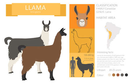 Camelids family collection. Llama graphic design. Vector illustration Иллюстрация