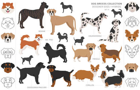 Designer dogs, crossbreed, hybrid mix pooches collection isolated on white. Flat style clipart dog set. Vector illustration