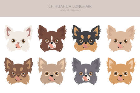 Chihuahua dogs different coat colors. Chihuahuas characters set. Vector illustration