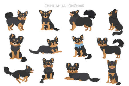 Chihuahua dogs in different poses. Adult and puppy set. Vector illustration 일러스트
