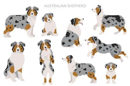Australian shepherd dogs set. Color varieties, different poses. Dogs infographic collection. Vector illustration Vecteurs