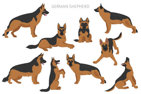 German shepherd dogs in different poses. Shepherd characters set. Vector illustration