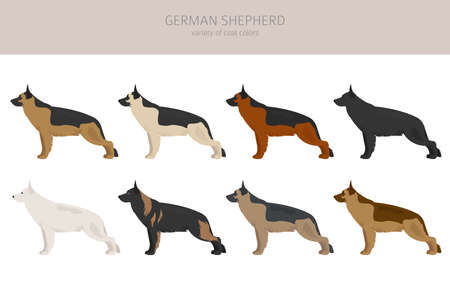 German shepherd dogs different coat colors. Shepherd characters set. Vector illustration