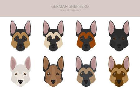 German shepherd dogs different coat colors. Shepherd characters set. Vector illustration
