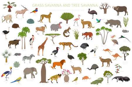 Tree savanna and grass savanna biome, natural region infographic. Woodland and grassland savannah, prarie, pampa. Animals, birds and vegetations ecosystem design set. Vector illustration