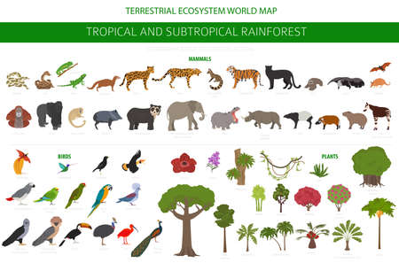 Tropical and subtropical rainforest biome, natural region infographic. Amazonian, African, asian, australian rainforests. Animals, birds and vegetations ecosystem design set. Vector illustration Stock Vector - 161474960