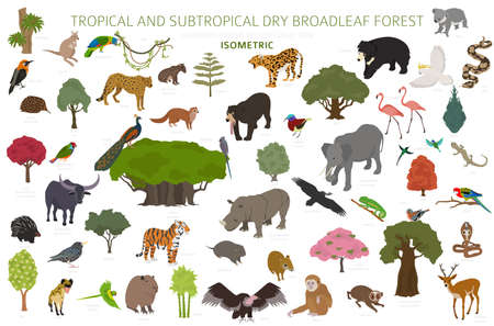 Tropical and subtropical dry broadleaf forest biome, natural region infographic. Seasonal forests. Animals, birds and vegetations ecosystem isometric 3d design set. Vector illustration