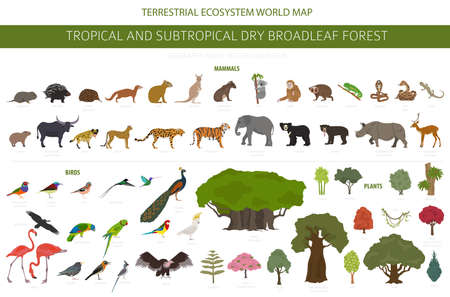 Tropical and subtropical dry broadleaf forest biome, natural region infographic. Seasonal forests. Animals, birds and vegetations ecosystem design set. Vector illustration Ilustrace
