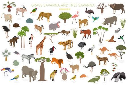 Tree savanna and grass savanna biome, natural region isometric 3d infographic. Woodland and grassland savannah, prarie, pampa. Animals, birds and vegetations ecosystem design set. Vector illustration