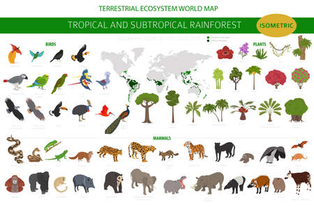 Tropical and subtropical rainforest biome, natural region infographic. Amazonian, African, asian, australian rainforests. Animals, birds and vegetations ecosystem 3d isometric design set. Vector illustration