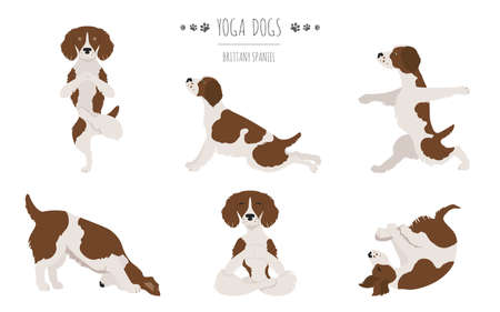 Brittany spaniel yoga. Yoga dogs poses and exercises. Vector illustration