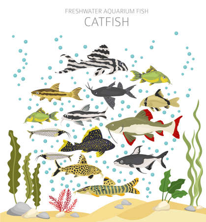 Catfish. Freshwater aquarium fish icon set flat style isolated on white. Vector illustration