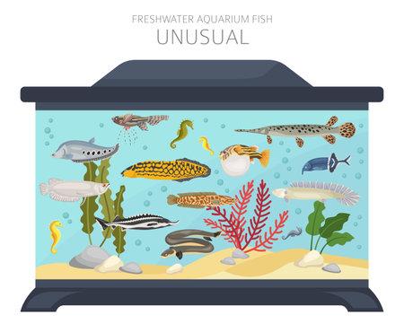 Unusual fish. Freshwater aquarium fish icon set flat style isolated on white. Vector illustration