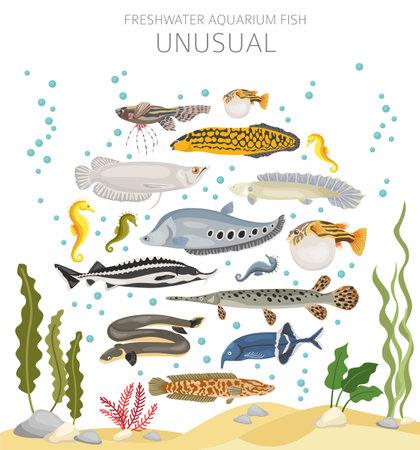 Unusual fish. Freshwater aquarium fish icon set flat style isolated on white. Vector illustration Vektorové ilustrace