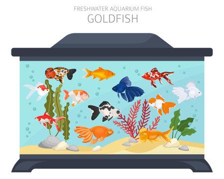 Goldfish. Freshwater aquarium fish icon set flat style isolated on white. Vector illustration