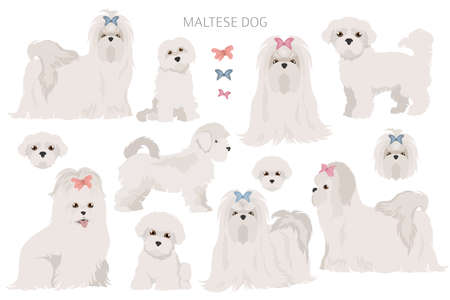 Maltese dogs in different poses. Adult and great dane puppy set. Vector illustration