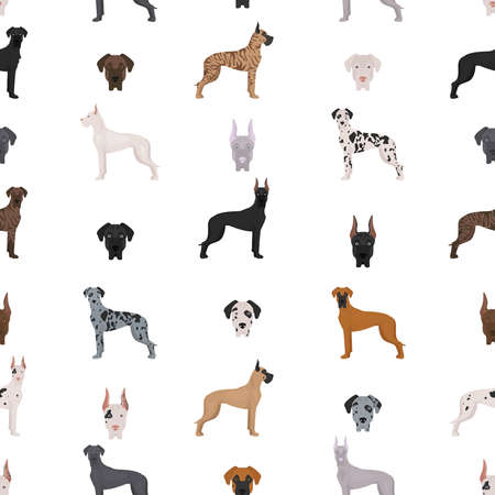 Great dane seamless pattern. Different variaties of coat color dog set. Vector illustration 일러스트
