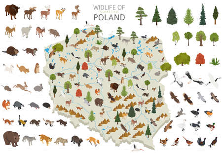 Isometric 3d design of Poland wildlife. Animals, birds and plants constructor elements isolated on white set. Build your own geography infographics collection. Vector illustration